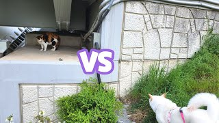 개 VS 길고양이, 개가 고양이에게 다가가는 법, 진돗…