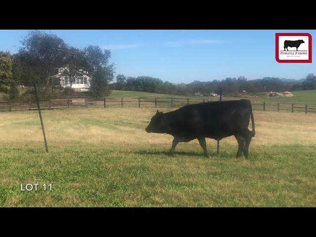 Powell Farms Lot 11