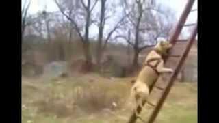 Собачий паркур