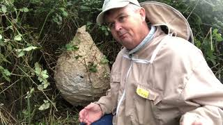 Asian Hornet Nest Removal