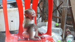 The Monkey Want To Give You A Hug Roblox Why Adorable Monkey Baby Donal Like To Sleep Hug Mom