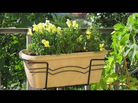Саженцы декоративных и плодовых растений -> Ярпортал