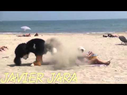 Playa para Perros Concello de Ares from YouTube · Duration:  4 minutes 33 seconds