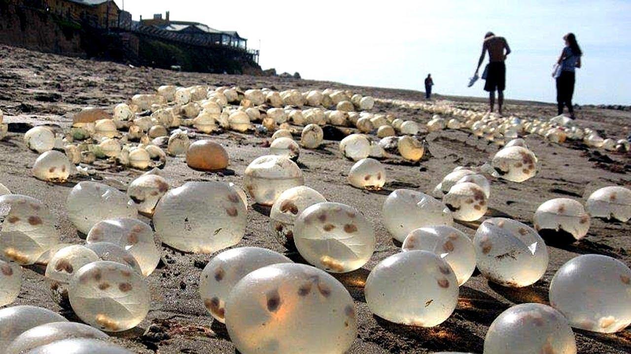 समुद्र किनारे मिला कुछ ऐसा जिसे देखकर सबके होश उड़ गए |  Most Amazing Facts.