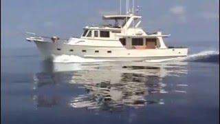 Beluga Cruising