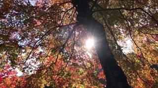 オカリナ&ピアノ「紅葉」長谷川孝二&千葉稔&豊島正巳