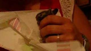 Repeat youtube video Baby Bunny Rescue - First Feeding