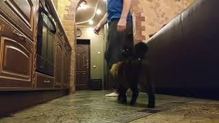 Обучение кота прыжкам