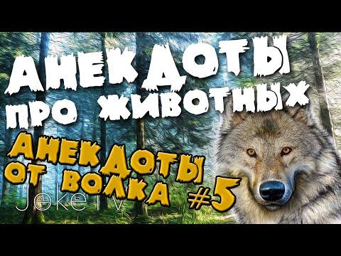 смешные красную и анекдоты шапочку про волка