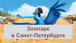 Смешные обезьянки, розовый фламинго, дикая кошка и др. животные в экзоопарке в Петербурге.