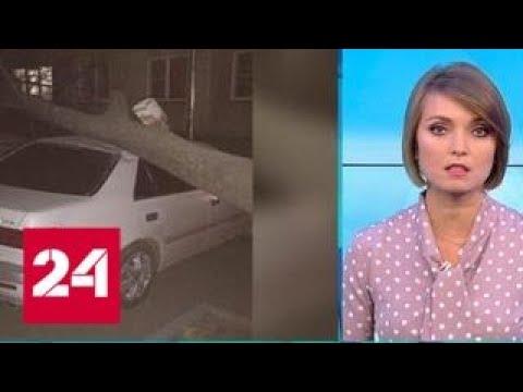 """""""Погода 24"""": штормовой ветер на Юге Сибири оставил без света тысячи людей - Россия 24"""
