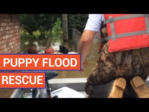 Incredible Pit Bull Puppy Flood Rescue Video 2016 | Daily Heart Beat