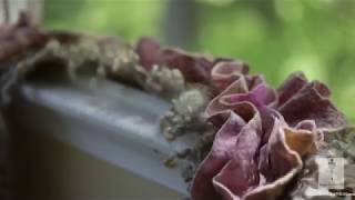 Chopin Macro Шопен Ноктюрн №2