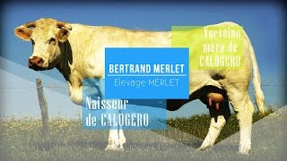 Bertrand Merlet