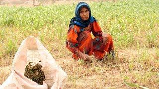 Йемен на грани голода, ООН призывает к миру