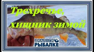 Диалоги о рыбалке - 089 / Трехречье. Хищник