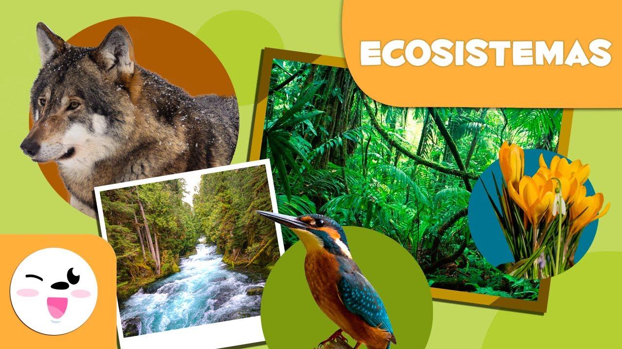 Qué Son Los Ecosistemas Tipos De Ecosistemas Para Niños Youtube