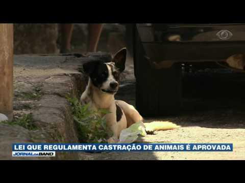 Lei que regulamenta castração de animais é aprovada