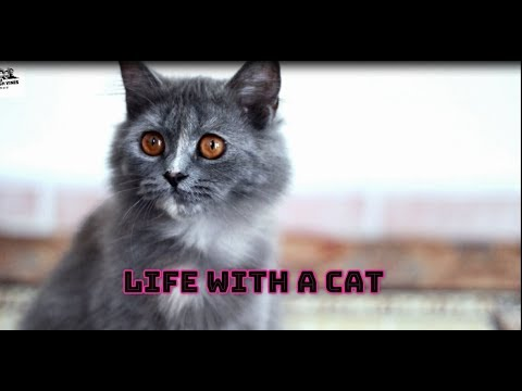 LIfe with a CAT - The Farigh Vines - 2019
