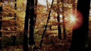 Eternal Autumn - Forest Of Shadows