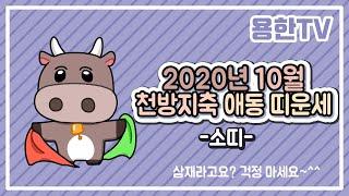 「용한TV」 천방지축 애동 띠운세 10月 - 소띠