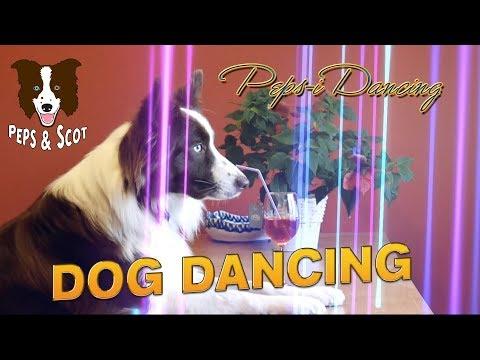 Dog Dancing - Peps-i Dancing