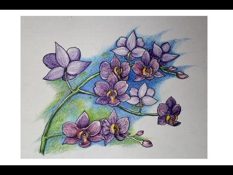 How To Draw Orchid Color Pencil Youtube