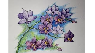 how to draw orchid  - color pencil