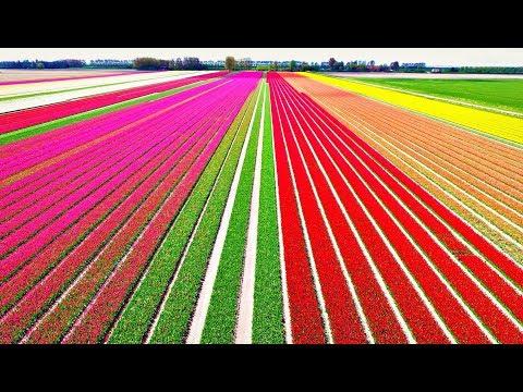 Крошечная страна, которая кормит всю планету