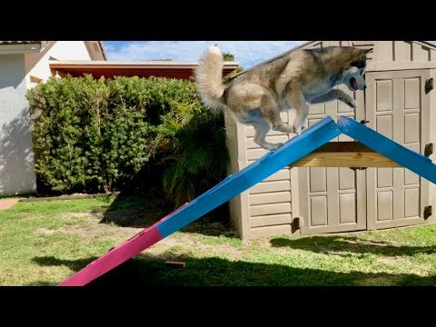 Part I - DIY Agility Course