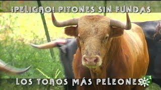 Toros sin fundas en los pitones de Dolores Aguirre | Toros desde Andalucía