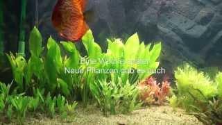 Kampf gegen Blaualgen im Juwel Rio 400 Diskus Aquarium