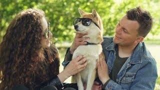 Smiling Dog Owners Are Patting Puppy with Sunglasses on Its Eyes and Smiling While Relaxing in Park