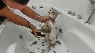 Veteriner 100 tl İsteyince Bende Kedimi Evde Tıraş Ettim (SAKIN SİZ YAPMAYIN !) Kedim Hayko