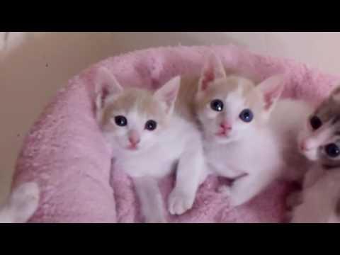 Cinder's Kittens on 7/20/16