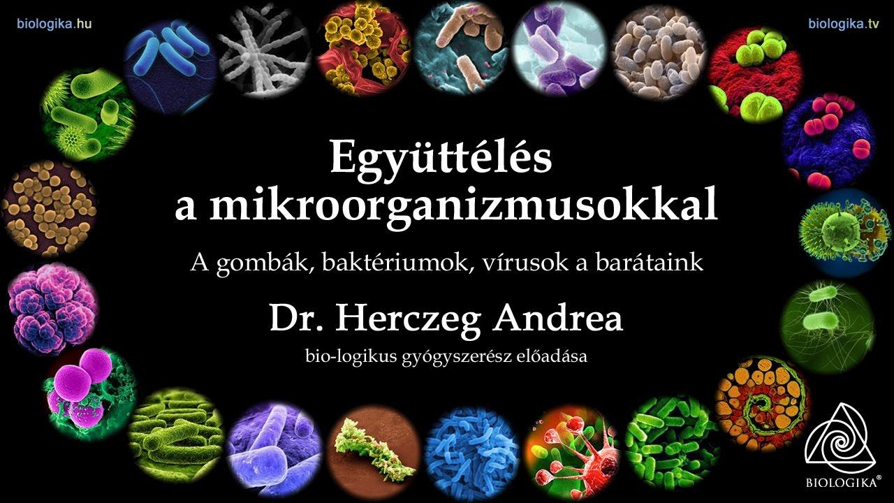 Különbség a baktériumvírusok gombák és paraziták között, Mi okozhat tüdőgyulladást?