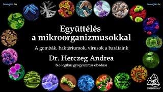 áttekintés a férgek gyógyszereiről az emberek számára)