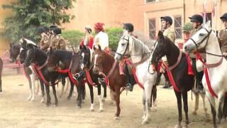 Dundlod MarWari  horse