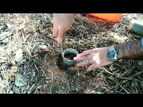 Soil core sampling