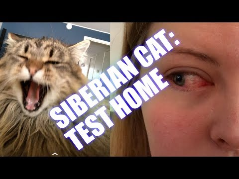 Siberian Cat: Test home