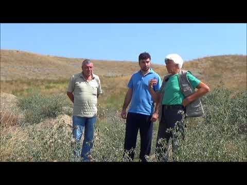 Южная Армения. Подбор участка для закладки орехового сада для Гевора Тевоса. Сентябрь 2017г