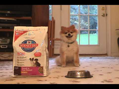 Science Diet Toy and Small Breed Dog Food