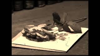 Trampled rose - Alison Krauss (Tom Waits cover/Lyrics)