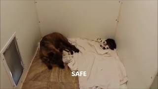 The Rescue of a homeless dog and her newborn babies