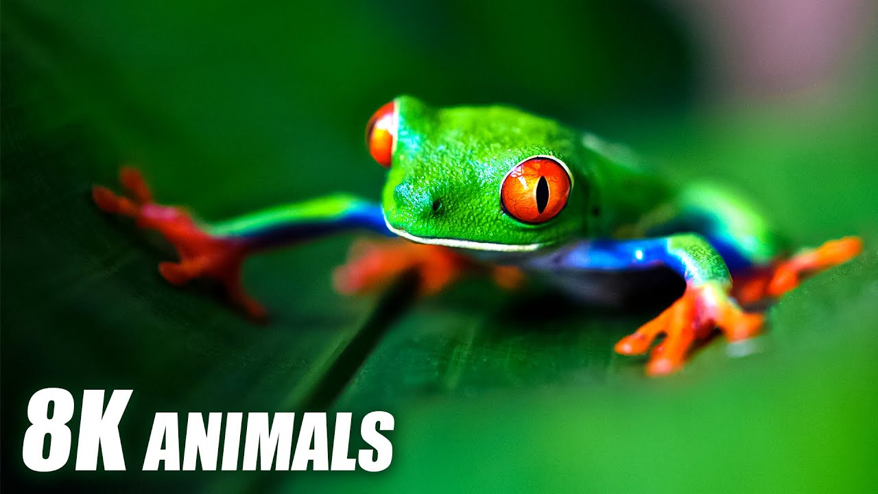 Exclusive Animals Collection 8K HDR 60FPS ULTRA HD