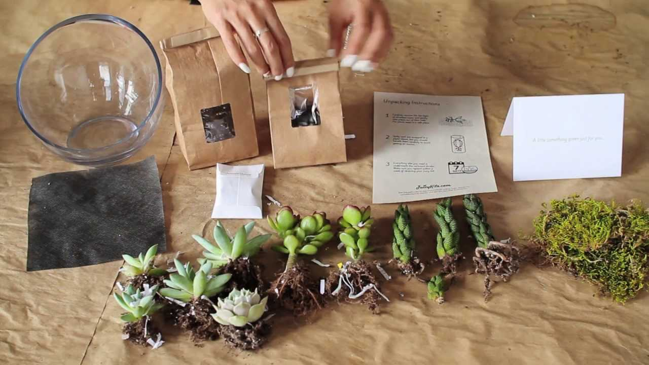 What S In A Diy Succulent Terrarium Kit From Juicykits Com Youtube