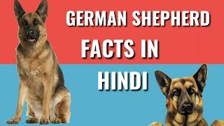 German Shepherd Dog Facts | in hindi |