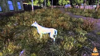 sZone Online - Приручение собаки