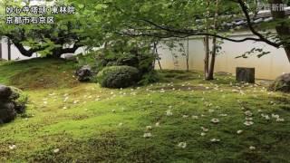 平家物語にうたわれた「沙羅双樹」の花で知られる妙心寺塔頭の東林院(...