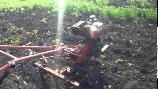Прополка кукурузы мотоблоком Зубр НТ 105(В этом видео показано как я мотыжу кукурузу., 2015-05-18T17:19:38.000Z)